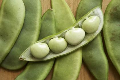 Hvordan å vokse og omsorg for Lima Bean Plants