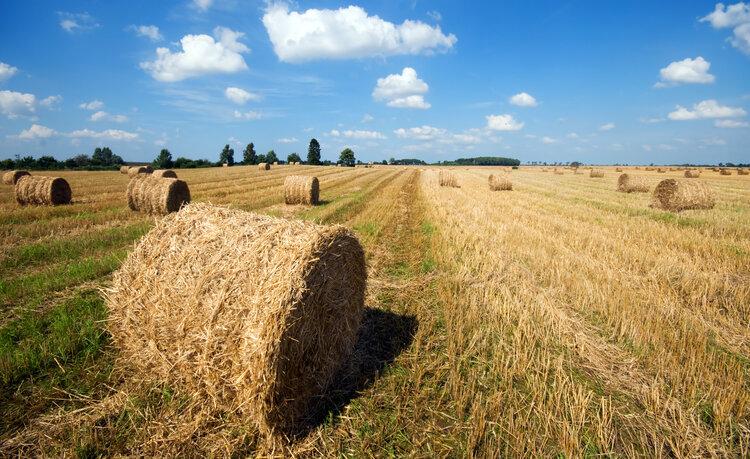 Positivo, el mercado inmobiliario rural registró su cuarta suba consecutiva
