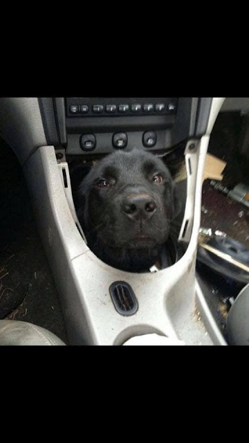 Transmission whines a little, 3rd gear is a little ruff