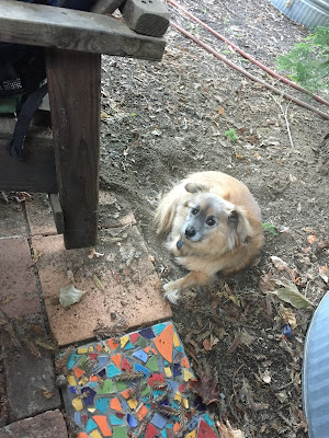 Little fluffy dog in the dirt next to a colorful tile.