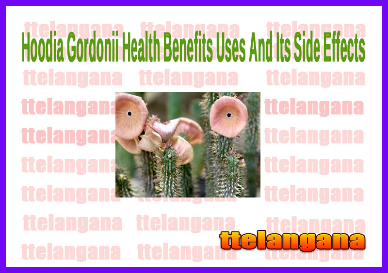 Hoodia Gordonii Health Benefits Uses And Its Side Effects