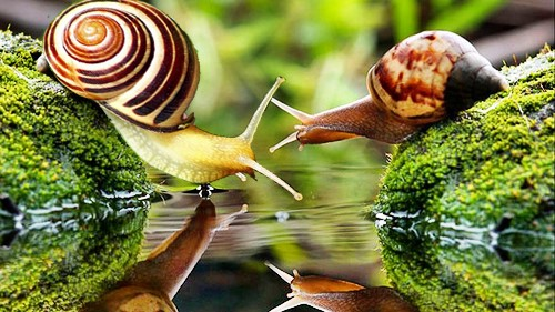 The snail mated