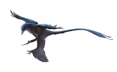 Microraptor | facts | size