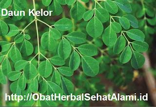 Khasiat daun kelor untuk diabetes kanker asam urat jerawat kecantikan yang ampuh
