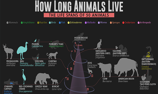 How Long Animals Live: The Life Spans of 50 Animals