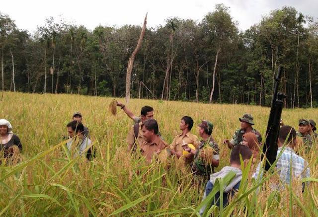 Kapten Inf Jony Siagian: Kegiatan Pengubinan Agar Pertani Tahu Perkiraan Potensi Hasil Tanaman Padinya