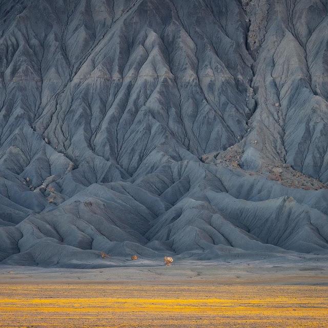 flores amarillas en el desierto y montaña al fondo