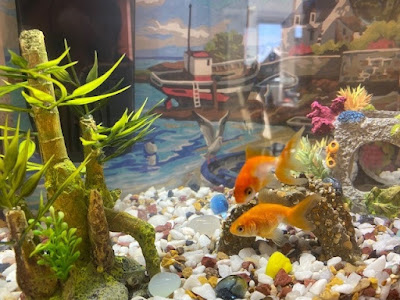 Two goldfish in a tank