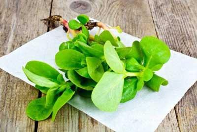 Propiedades y usos medicinales de la verdolaga