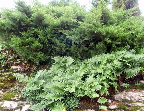 diferentes tonos de verde en el jardín