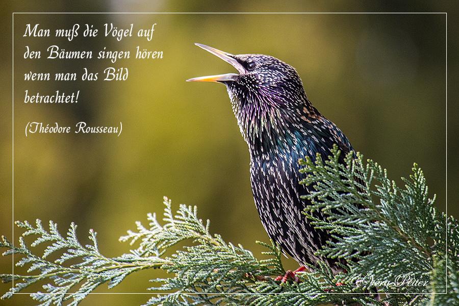Zitate Vögel