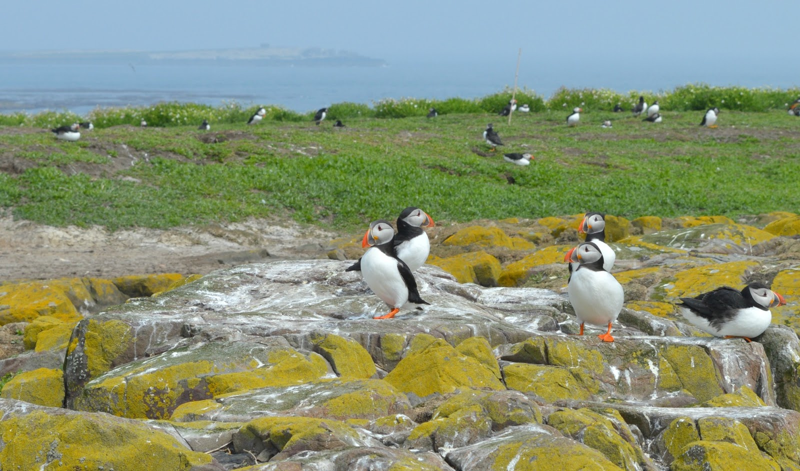 Puffin Watching on the Farne Islands with Serenity Boat Tours