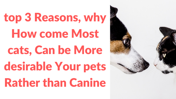 top 3 Reasons, why How come Most cats, Can be More desirable Your pets Rather than Canine