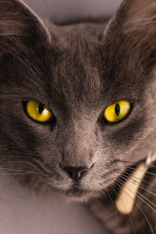 Moving and Feline Concerns