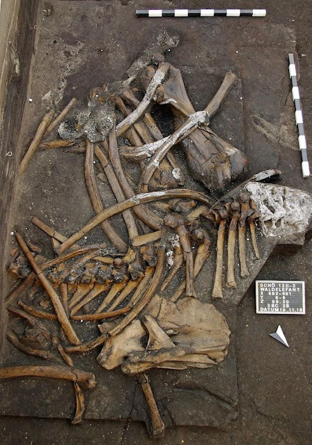 300,000-year-old nearly complete elephant skeleton unearthed at Schoningen site in Lower Saxony