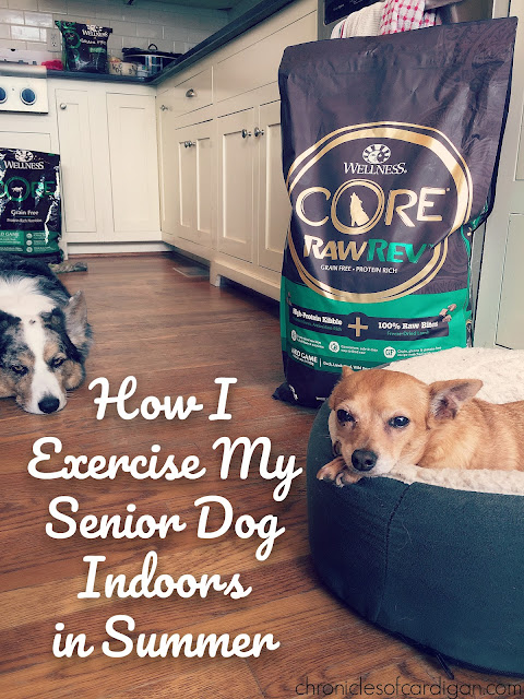 How I Exercise My Food-Motivated Senior Dog Indoors in Summer