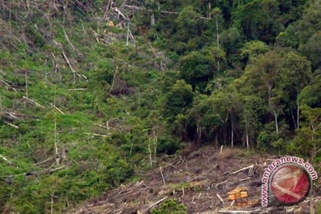 hutan lindung bukit daun yang gundul karena ditebangi