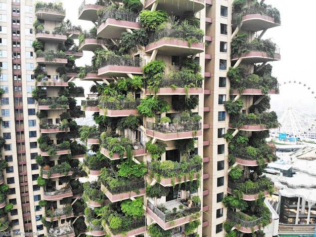 Khu rừng thẳng đứng 30 tầng