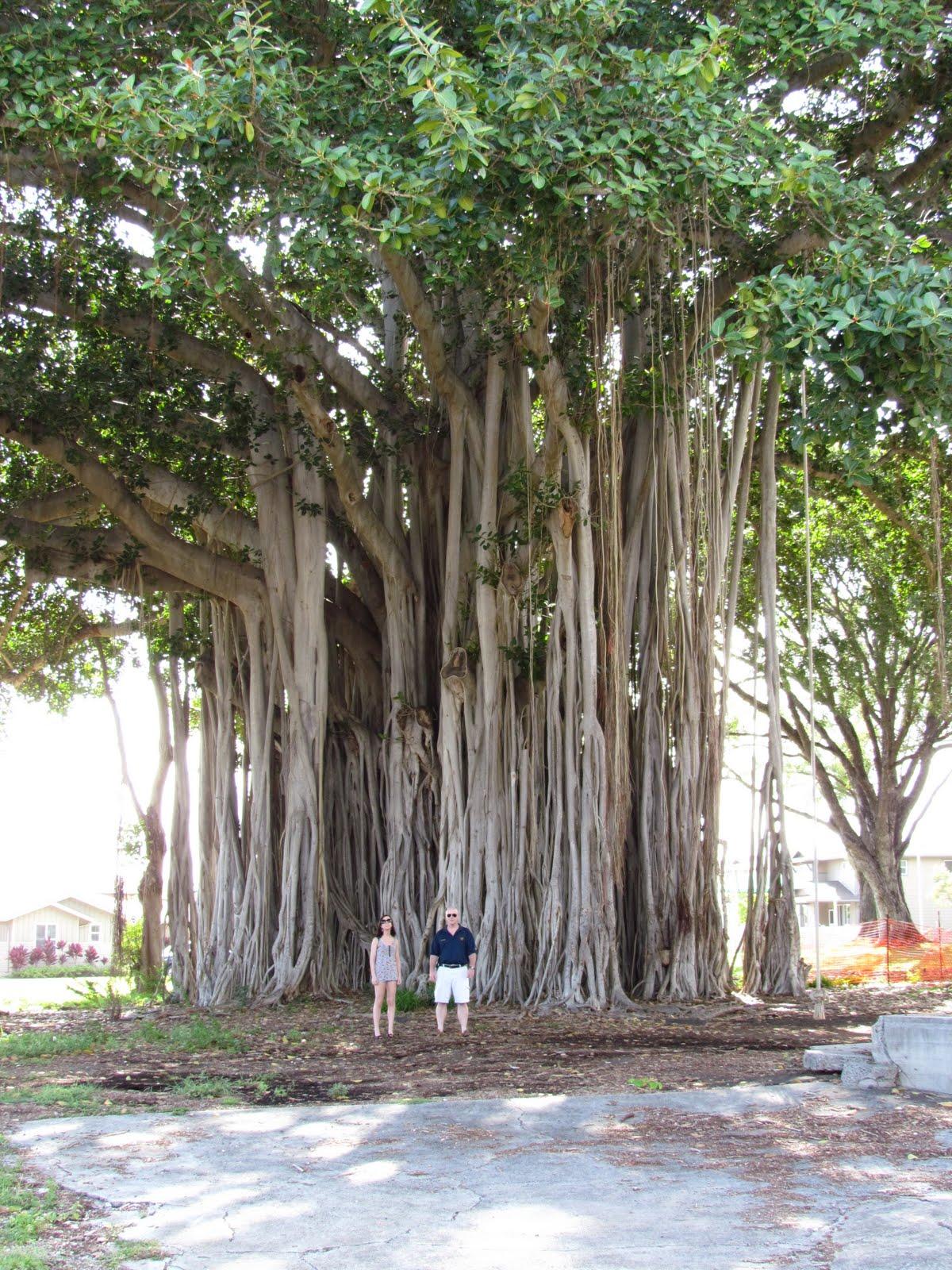 A Soul's Journey: My Lakshmi Tree...