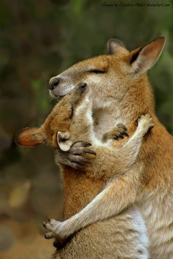 21 Animal Hugging Pictures (21 Pics)