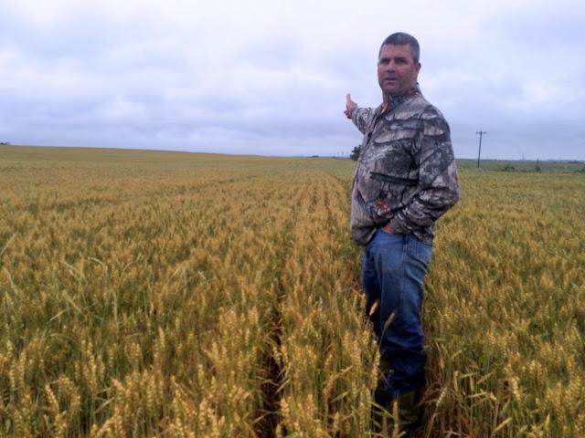 wheat field near Tonkawa