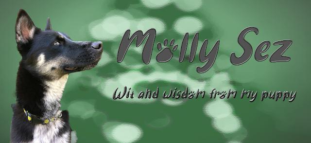 Molly Sez Header