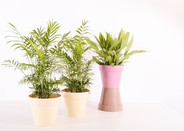 how to start indoor plant business