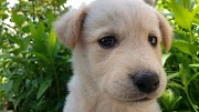 How to train your puppies - ultimate guide