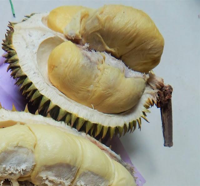 Bibit Durian Petruk, Si Kecil Yang Nikmat