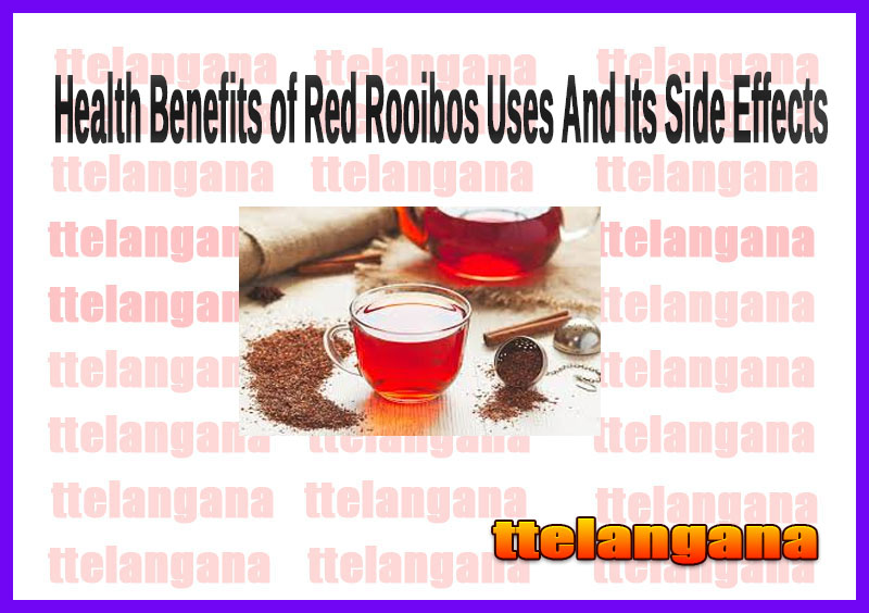 Health Benefits of Red Rooibos Uses And Its Side Effects