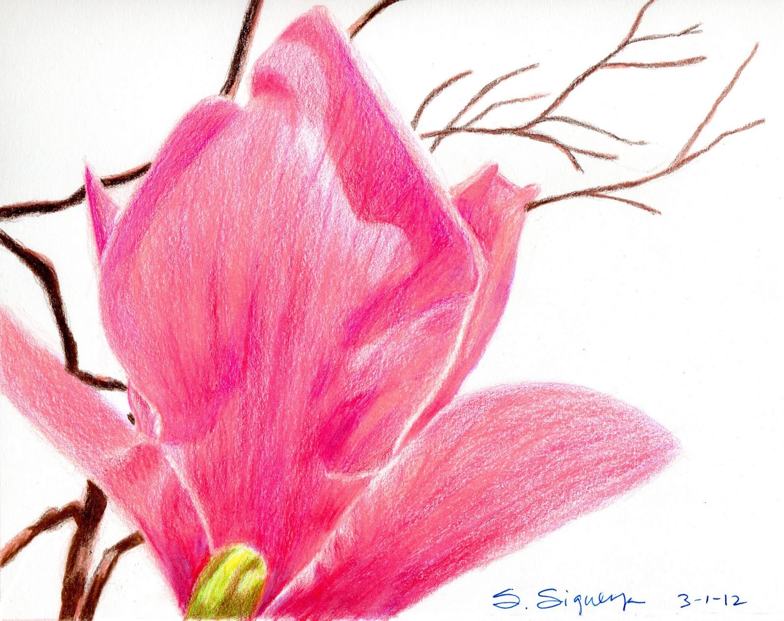 Pink Magnolia Tree Blossom