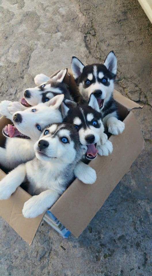 Top five Healthiest Dog Breeds