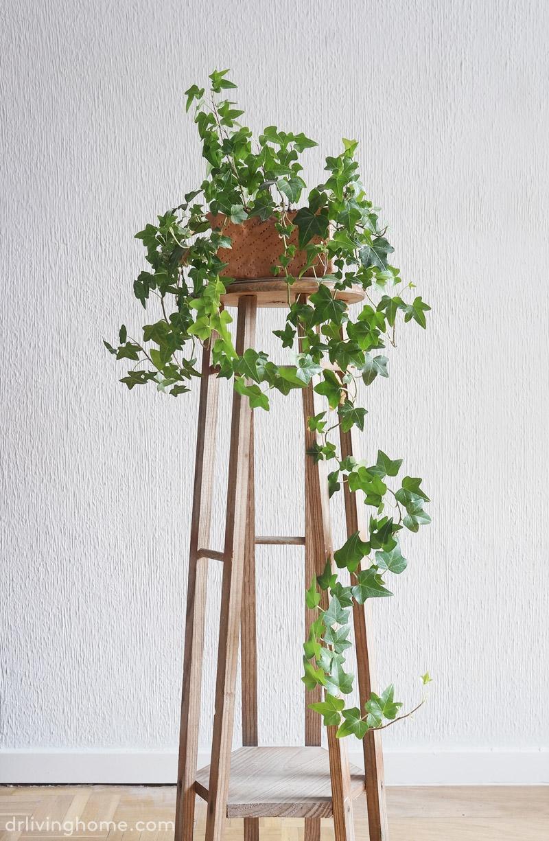 5 plantas fáciles de cuidar II