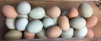 Blue, green, brown and pink chicken eggs.