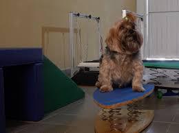 equilíbrio em cães