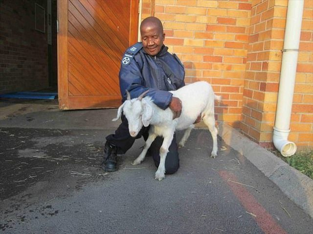 33-Year-Old South African Man Found Guilty Of Sleeping With A Goat