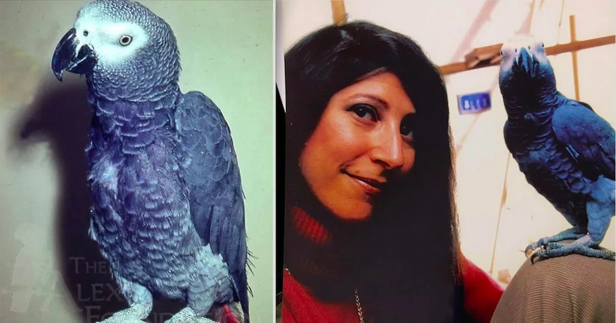 Alex, The African Gray Parrot, Was Perhaps The First Animal To Ever Ask Deep And Meaningful Questions