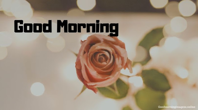Good Morning Images In Roses 1