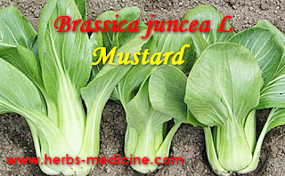 Mustard Use For Natural Health