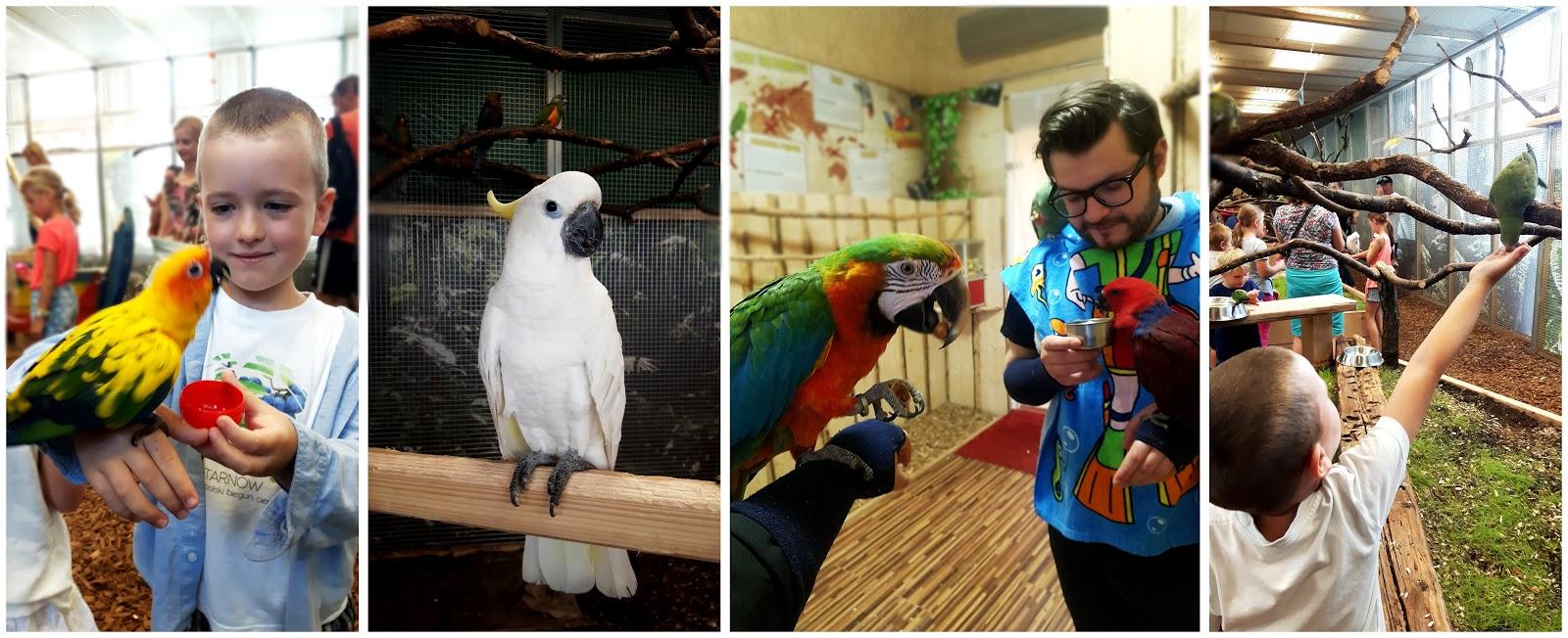 papugarnia kraków