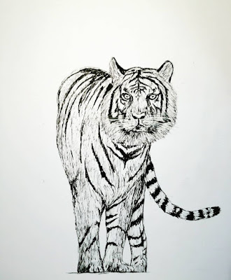15+ tiger drawing images which are easy to draw | tiger sketch