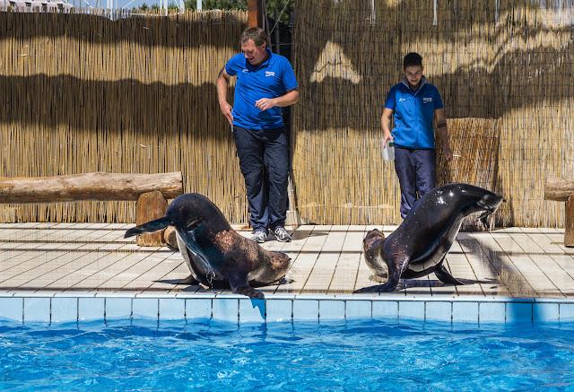 focas-zoo-safari-fasano
