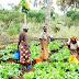 70 per cent of farmers in Nigeria are women ― SWOFON