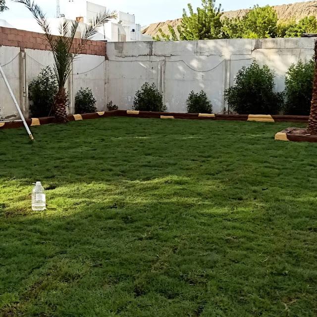 تنسيق حدائق وتقليم الاشجار بالطائف