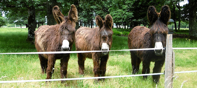 Poitou Asses. Indre. France. Photographed by Susan Walter. Tour the Loire Valley with a classic car and a private guide.