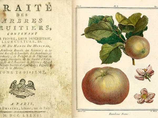 أطروحات عن أشجار الفاكهة - Treatise on Fruit Trees