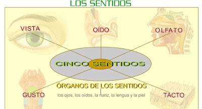 http://www.eltanquematematico.es/lossentidos/organosdelossentidos_p.html