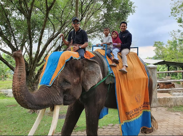 gajah di wisata linggoasri pekalongan