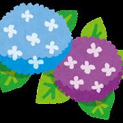 梅雨のイラスト「紫陽花」