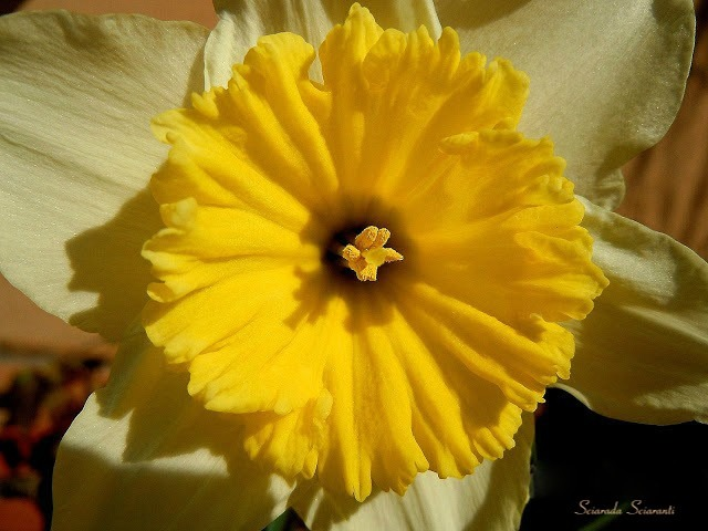 Narciso - Dettaglio